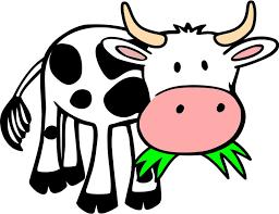 گاو در حال خوردن علف